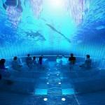 phuket aquarium (3)