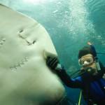 phuket aquarium (6)