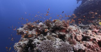 Helmuth reef_Copyright