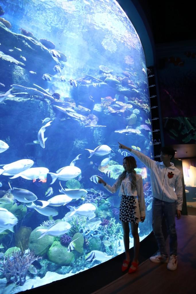SEA LIFE Bangkok_Discover The New Shark Family1