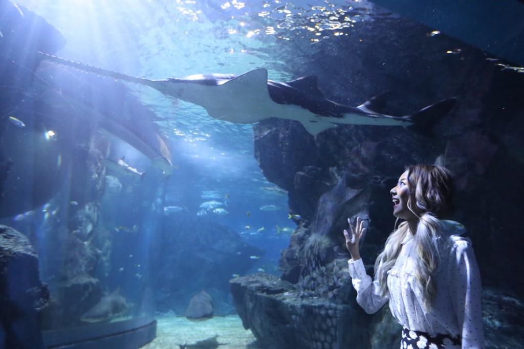 SEA LIFE Bangkok_Discover The New Shark Family17