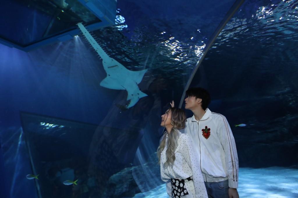 SEA LIFE Bangkok_Discover The New Shark Family5