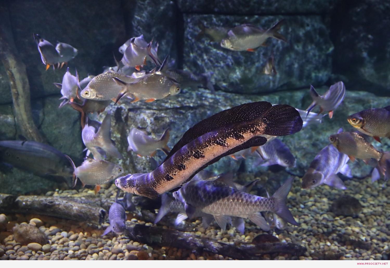 SEA LIFE_New Creature Paradise tank (1)