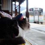 สถานีแมว (2)