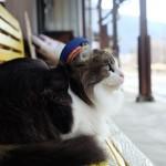 สถานีแมว (4)