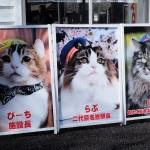 สถานีแมว (5)